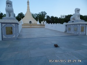 A turtle visits the Pagoda_1
