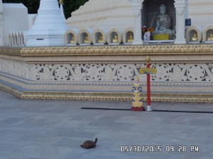 A turtle visits the Pagoda_3